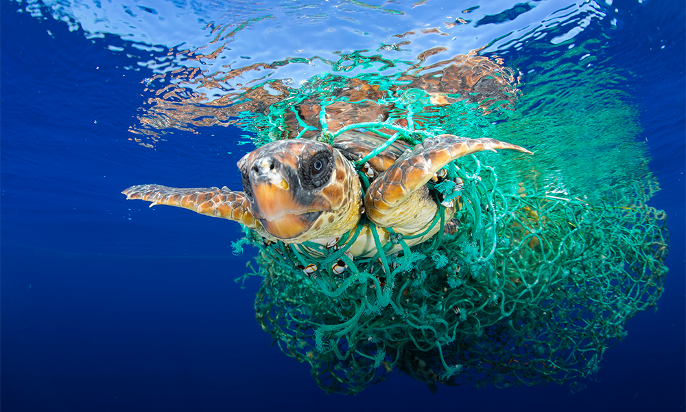 Turtle killed in plastic fishing nets